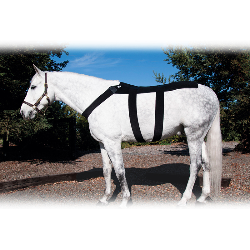 IceHorse Back Blanket